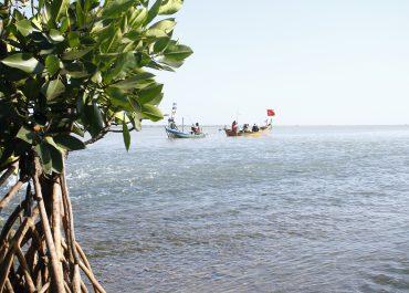 Pencemaran Logam Berat Dan Distribusi Akumulasi Terhadap Mangrove